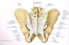 仙 結節 靭帯