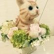 ネコ猫ニャンコ( ̄▽…