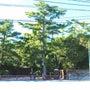 三浦の松輪で地魚料理…