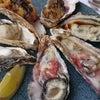 牡蠣ちゃ~の画像