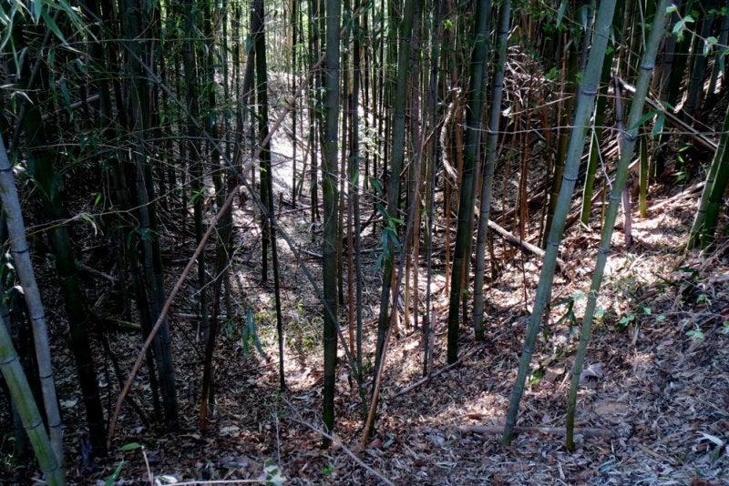 明徳寺城③竹薮の中の堀