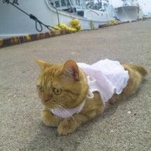 猫の写真でどんなに被…