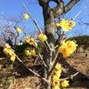 春「梅の饗宴」の画像