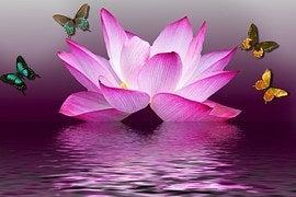 篠田麻里子様へのハスの花の画像
