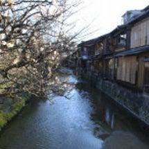 白梅咲く祇園白川
