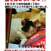 迷子猫!町田市成瀬付近で拡散希望!!の画像