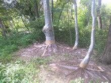 ナラガレ対策 ビニール被覆の実施 奈良県4