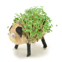 羊の背中…  横浜ー…