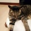 ネコの日♪