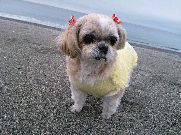 高知の桂浜の近くでとった写真です