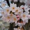 春の季節のパワーの画像