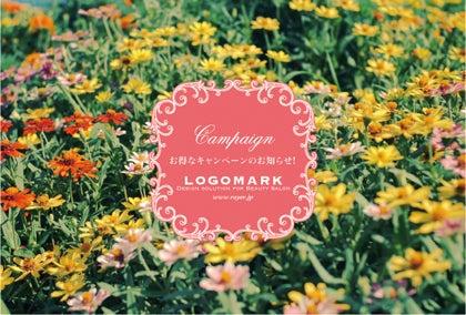 お花かわいいキャンペーンDMはがき・ピンク