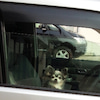 ギャー!! 愛犬が閉じ込められたΣ(゚Д゚;≡;゚д゚)の画像