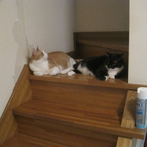 階段の途中で・・・
