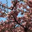うるう年の木の芽どき