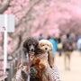 3月4日~♪クラウン…