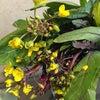 紅菜苔の画像