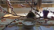 甘酒の手作りで遅咲きの梅の花をめでながら