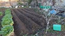 ジャガイモ植えた
