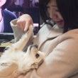 桃の節句と愛犬の誕生…