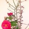 3月6日(日)「ほっこりひだまりCafe in福寿舎」に出展の画像