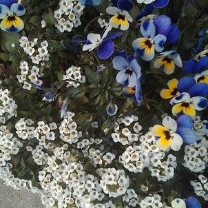 西宮「夙川・短歌と花」その358の画像