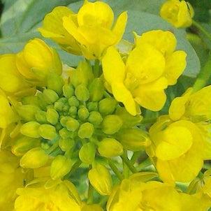 西宮「夙川・短歌と花」その353の画像