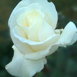 西宮「夙川・短歌と花」その356の画像