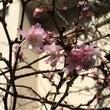 お花界はすっかり春!…