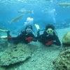 青の洞窟は中止でしたがサンゴビーチで体験ダイビングの画像
