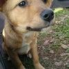 えひめのいぬねこ里親さがし会2016年3月開催日程&3/13参加犬猫たち紹介の画像