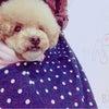 我が家の愛犬紹介の画像