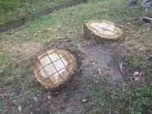 ナラ枯れ対策 伐倒処理 奈良県4