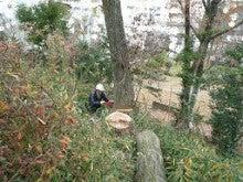 ナラ枯れ対策 伐倒処理 奈良県2