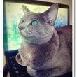 わがもの顔な猫