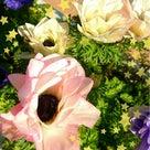 朝のキレイな花と雑誌の撮影参加。の記事より