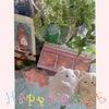 お花屋さんの お花の 色集めの画像