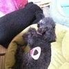 我が家の愛犬2の画像