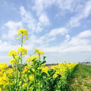 春の花だよりの画像