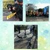 昨日の白水大池公園のフン一掃大作戦♪の画像
