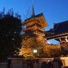 京都 東山花灯路の画像
