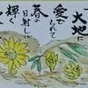 福寿草の花が咲きました・・・No931の画像