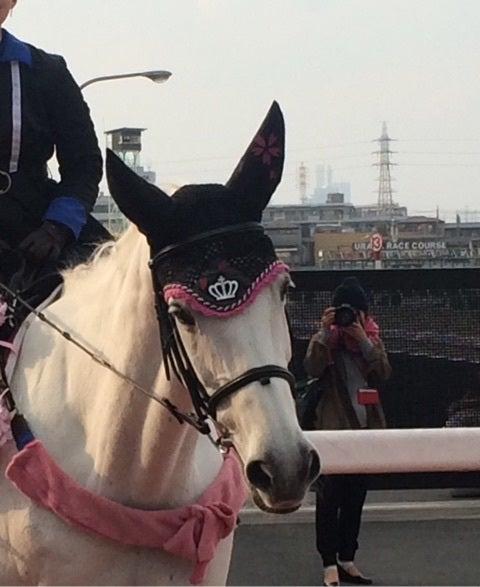 競走馬ではない可愛い馬たち 秋田奈津子の思考回路