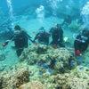 青の洞窟は中止でしたがサンゴビーチで体験ダイビング3月も春休みの予約も沖縄満喫テイクダイブでOKの画像
