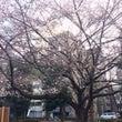 浜町公園の桜2016