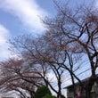 春を実感?散歩