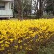 2016年、春