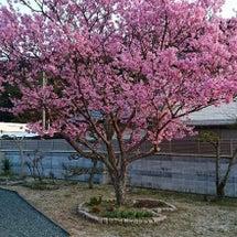 桜の季節(●´ω`●…