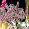 中洲大通りの画像