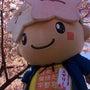 桜とミヤリーの競演(…
